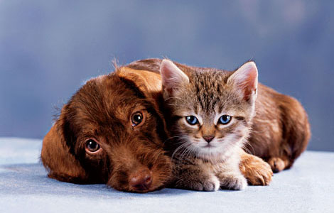 dog and cat happy and healthy using probiotic supplements